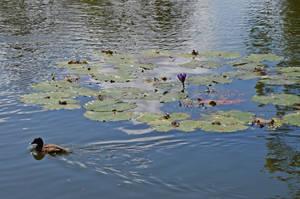Lake scene by iskarlata