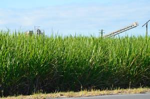 Sugar cane country by iskarlata