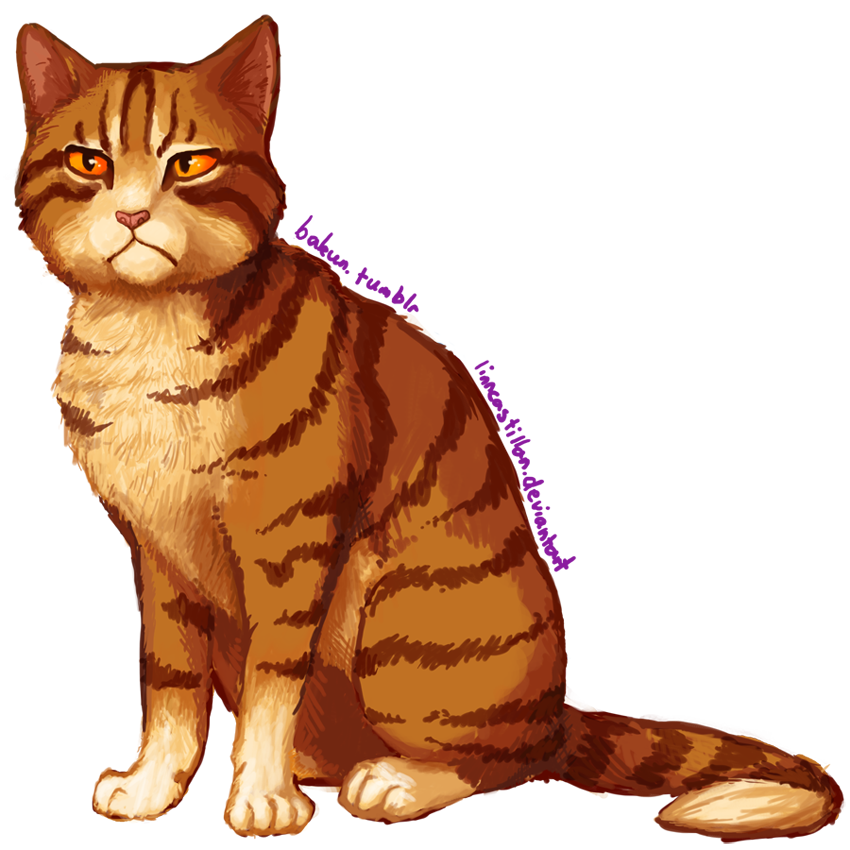 Which Dawn Of The Clans Warrior Cat Are You: Warriors: Thunder By Drekalder On DeviantArt