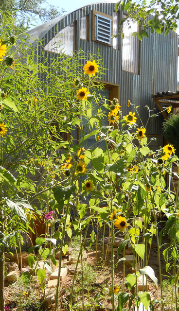 Siding with the Sunflowers