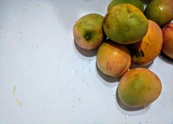 Mango Rain study