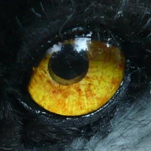 DarknessWhisperer's Profile Picture