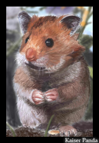 Portrait - Cute Hamster by panda89