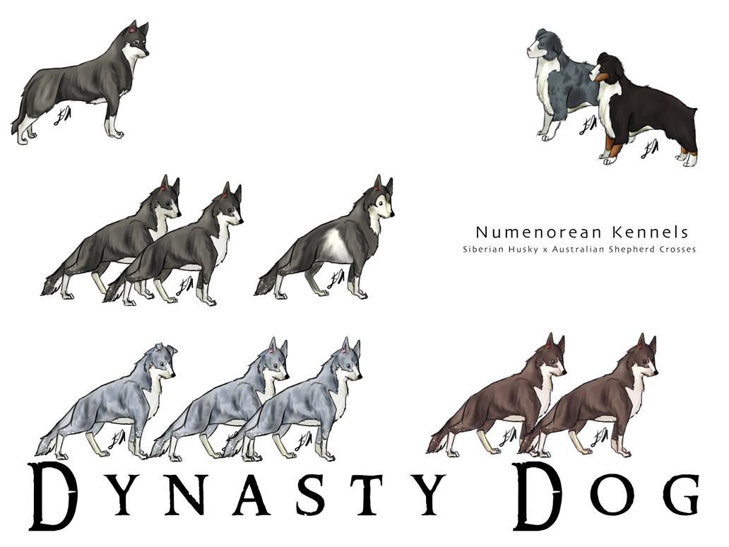 Souvent Siberian Husky x Australian Shepherd (Dynasty Dog) by V-enusian on  OF81