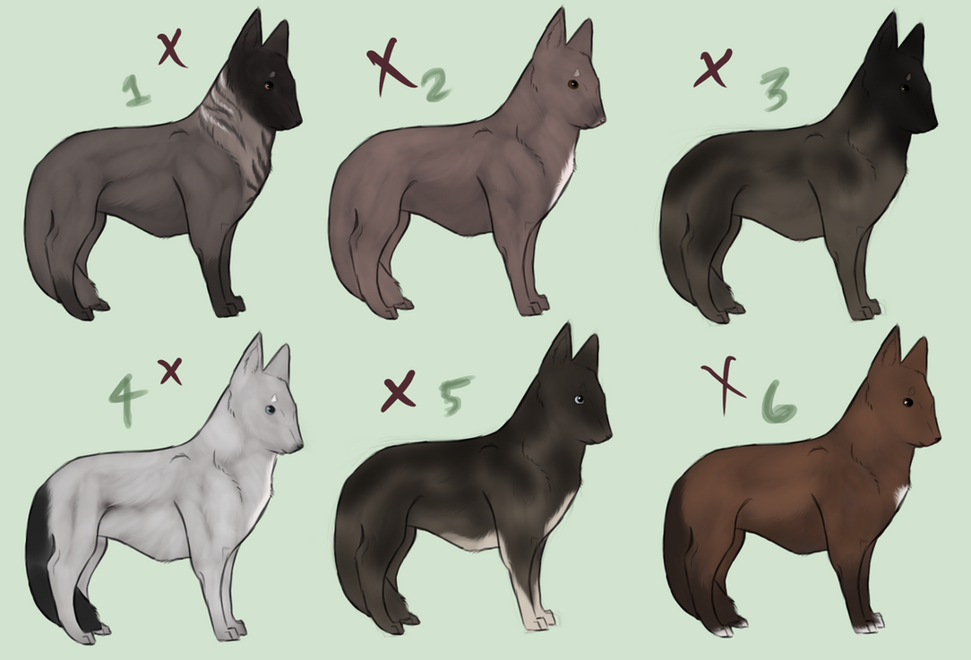 Image Result For Northern Tails Dog