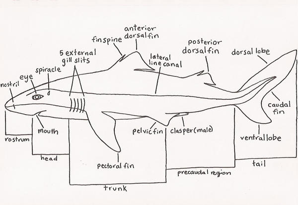 Dogfish Diagram Outer - Auto Electrical Wiring Diagram •