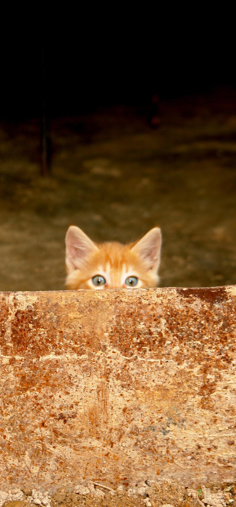 gatolargito by emilie-cat