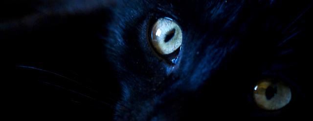 Black Cat by Flugcojt
