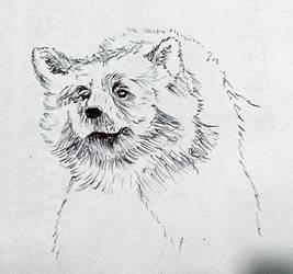 Balu Sketch