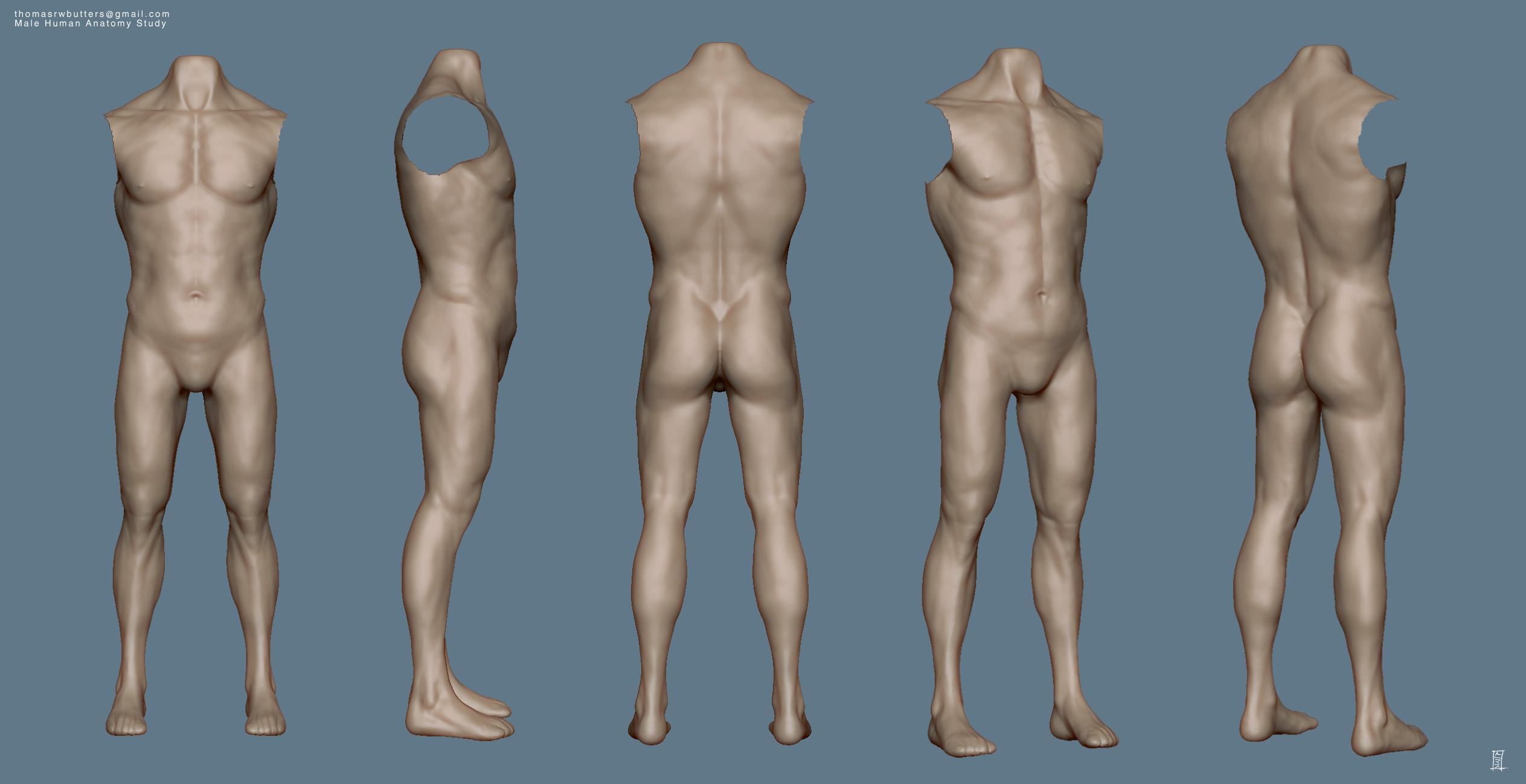 Male Human Anatomy Study by MrNinjutsu on DeviantArt