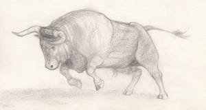Bull sketch