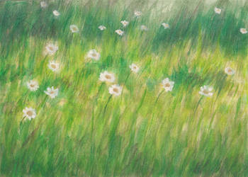 White flowers in a green field by Ana2Mars