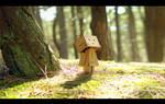 Danbo's Woodland Wander