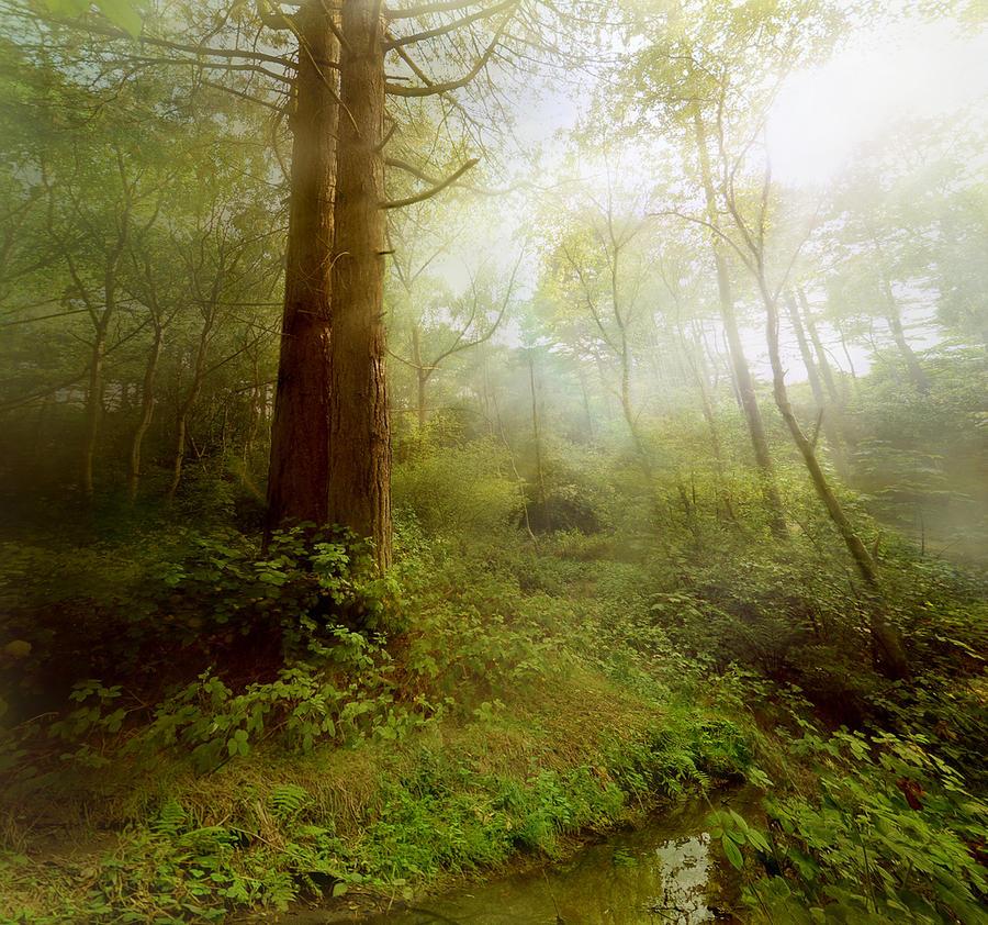 Enchanted Woodland by RyanMichael