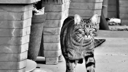 Cool Cat ~BW~