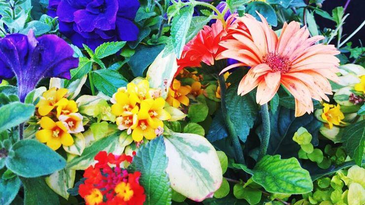 Rainbow Flowers by Anaxandreah