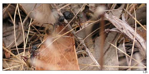 Ants... by Snuffalupagas