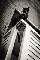 Balcony cat by ukapala