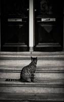 The cat who waited by ukapala