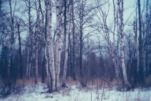 Woods by bluecharlotte
