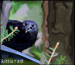 Grackle Bird by kittie78b