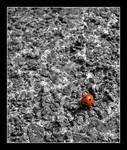 Ladybird Travels