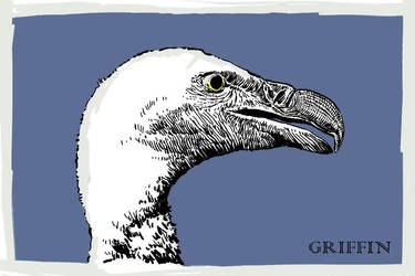 Griffin by ebver