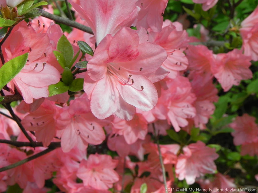Spring flowers by lightybug on deviantart spring flowers by lightybug mightylinksfo