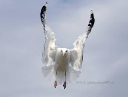 Flutter by Lightybug