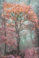 Enchanted Forest by ctammycook2
