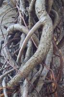 Heart Shaped Tree by serp-stock