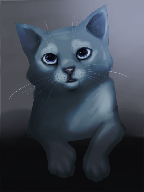 Cat portrait by Afina-Energy