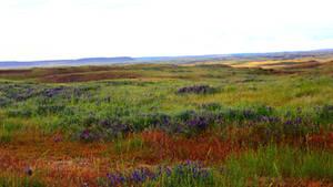 Roadside Columbia Basin - Background by Valarian-Warrior