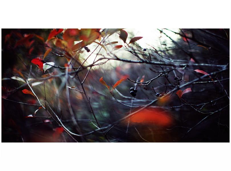 Autumn. by immugraah