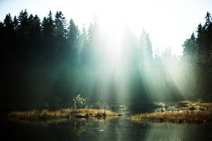 Sunrays. by immugraah