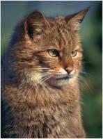 Wildcat - Green eyes see everything by AStoKo