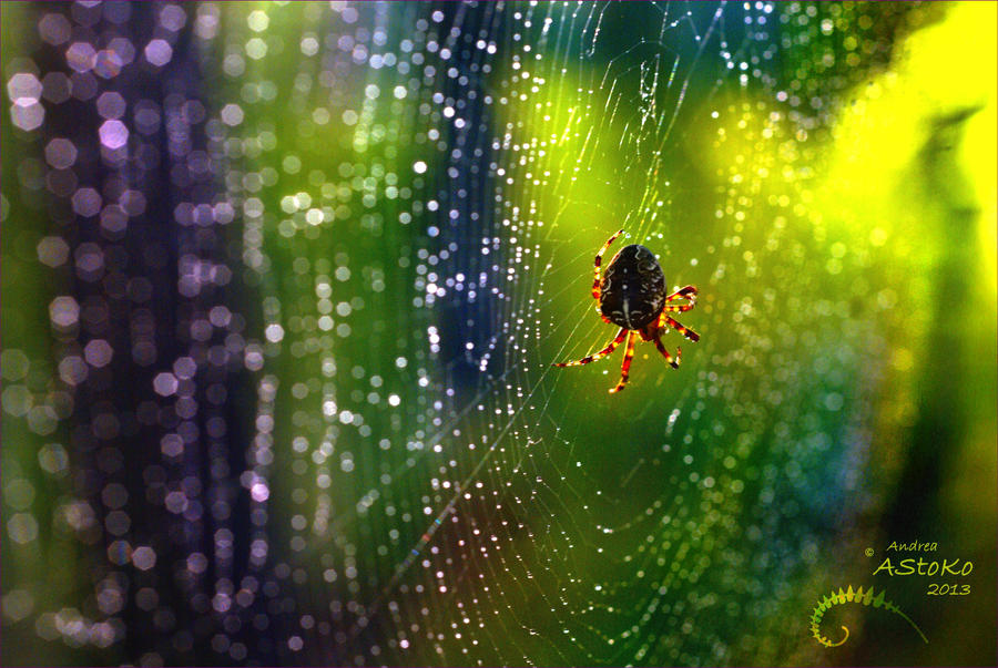 psychedelic spiderweb by AStoKo