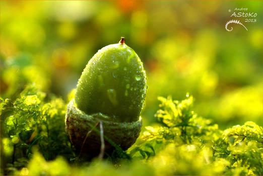 Soon I'm an oak by AStoKo