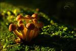 Orange Mushrooms 1