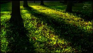 Green shadows by AStoKo