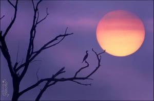 Daybreak by AStoKo