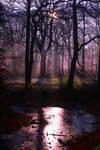 Purple Sunrise symphony