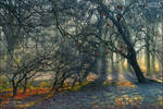 Whispering forest 1