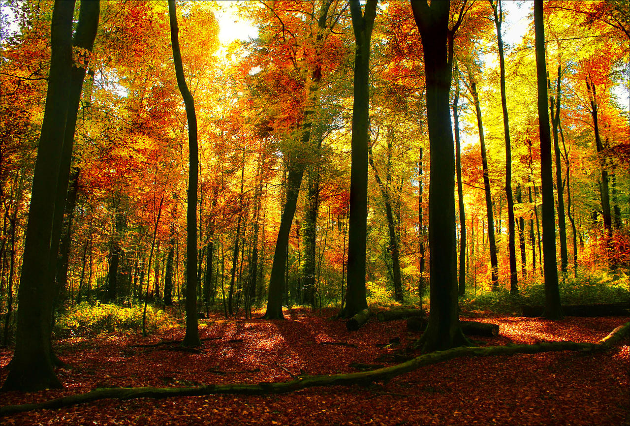 Autumn Forest lightning - AStoKo FREE STOCK IMAGE by AStoKo