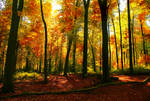Autumn Forest lightning - AStoKo FREE STOCK IMAGE