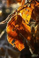 Shine Autumn Leaf by AStoKo