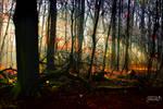 undergrowth Forest