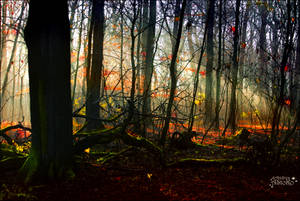 undergrowth Forest by AStoKo