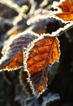 Forest autumn leaves 1 - AStoKo STOCK
