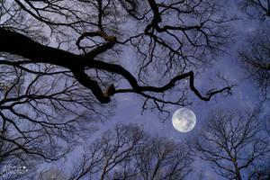 Luna Inspiration 2 by AStoKo
